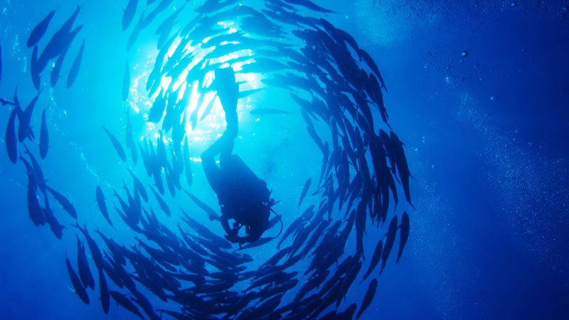 diver-fish-red-sea-egypt.jpg