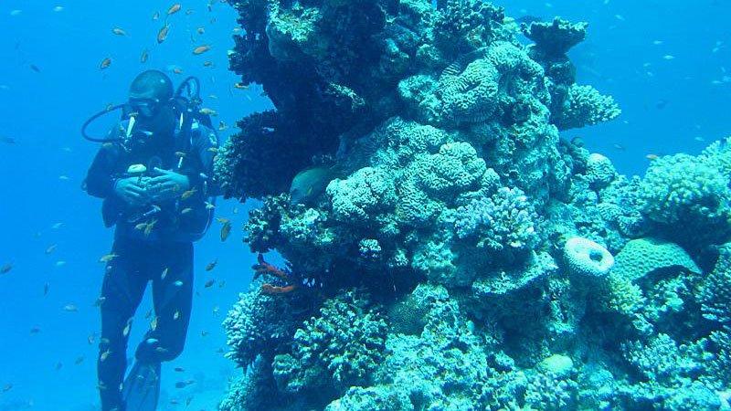 diving-red-sea-egypt.jpg