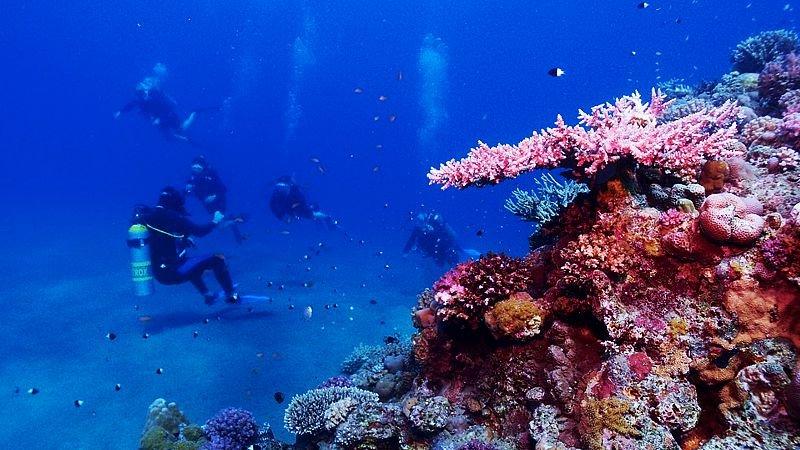 red-sea-underwater-egypt.jpg