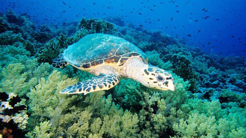 turtle-red-sea-egypt.jpg