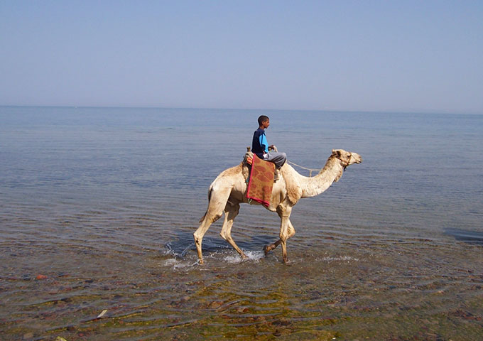 Local boy riding a camel in Dahab