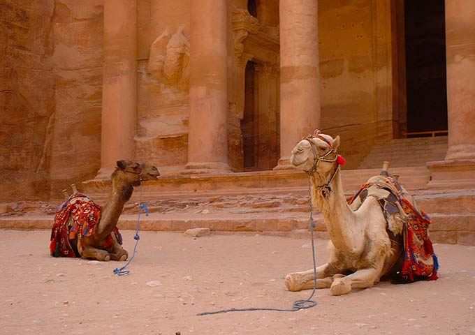 Camels outside the Treasury, Petra, Jordan